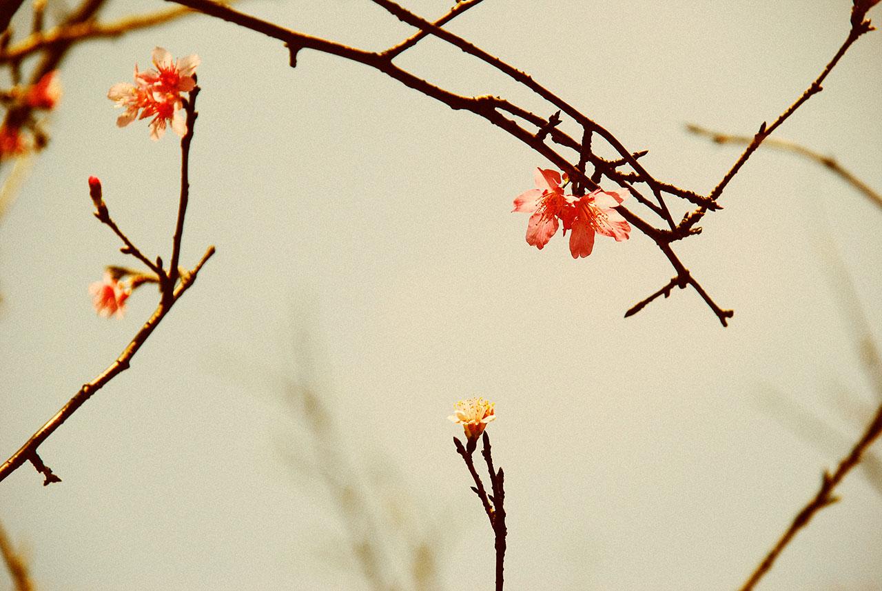春天.花蕊