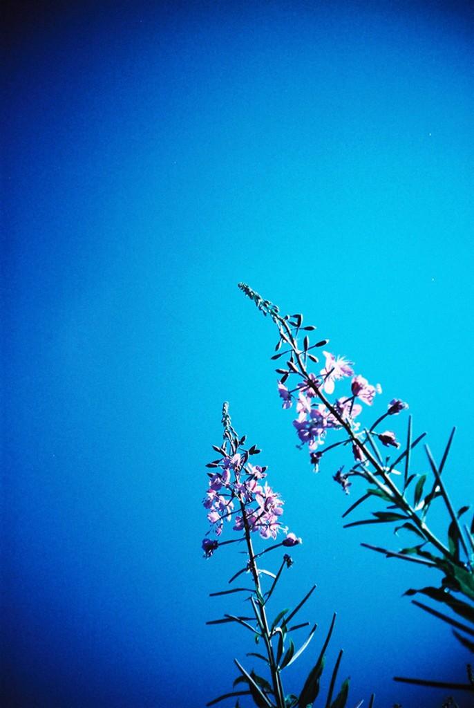 記得那天的天空藍