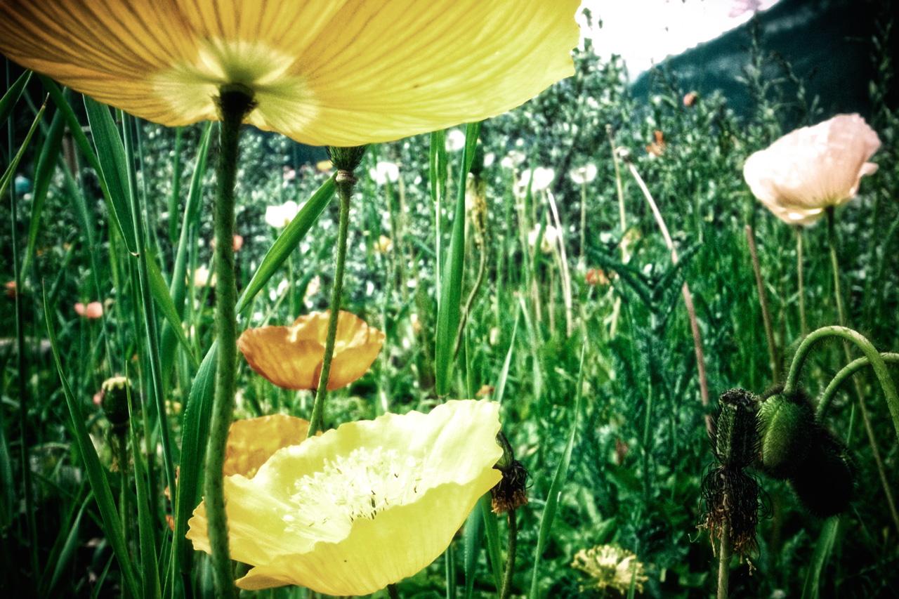 小森garden